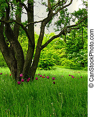 Ecological meadow - A superb looking meadow with bulb...