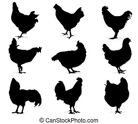 Hens - Silhouette of hens