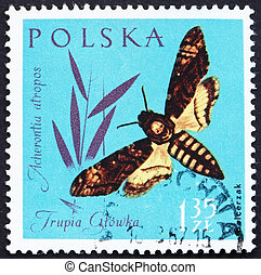 Postage stamp Poland 1961 Death?s- head Moth, Insect -...