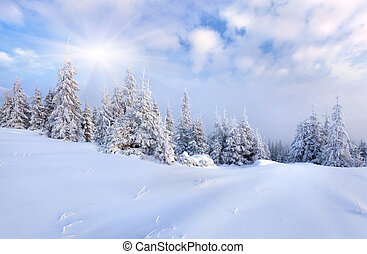 hermoso, invierno, paisaje, nieve, cubierto, árboles