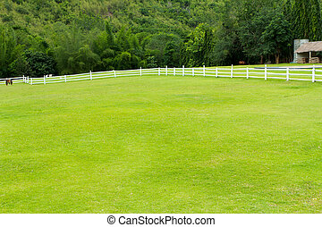 horse with fence and Green grass