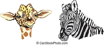 African animas - zebra made in eps