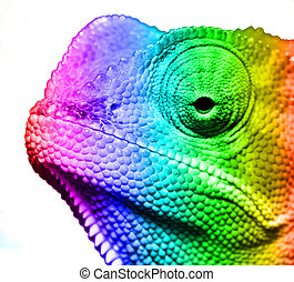 Macro of multi colored cameleon on a white background