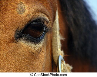 Horse eye - Wise bay horse eye close up