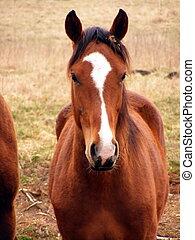 Young colt portrait