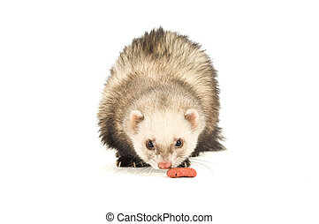 Ferret isolated on a white background