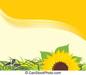Sunflower with grass and pips