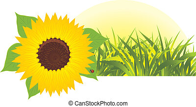 Sunflower with grass. Banner