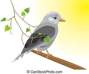 Jay and birch sprig. Vector illustration