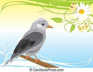 Jay and chamomile with butterflies. Vector illustration
