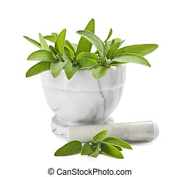 Sage in a mortar isolated on white