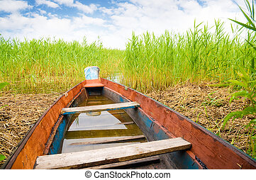 Green boat in a high cane on the bank of lake