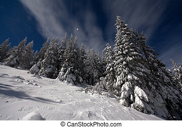 night view of snow-covered fir trees with the stars