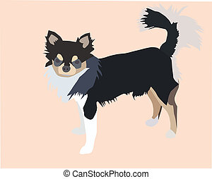 Chihuahua - Vector file of male long hair chihuahua