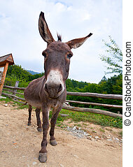 Wide angle shot of donkey on the country road