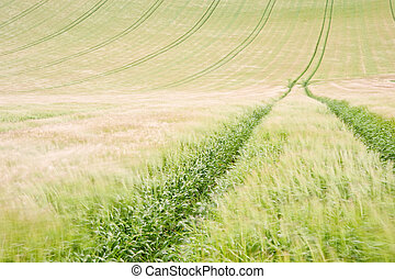 Landscape across agricultural fields on windy Summer day