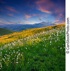 Beautiful summer sunset in the mountains with a feather grass.