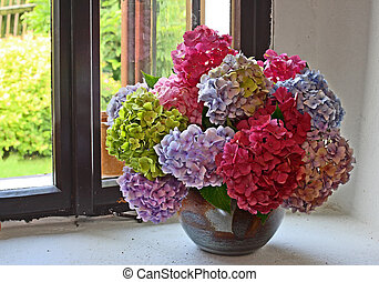 hydrangea bunch - bunch of hydrangea flowers on a windowsill...