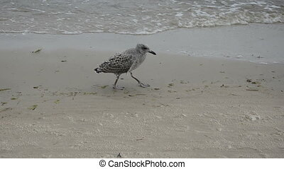 lonely seagull on the beach