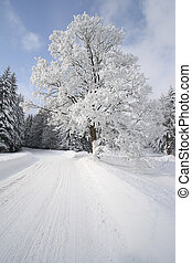 a snow-covered tree on the road