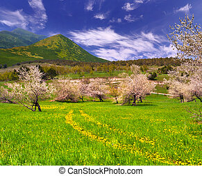 Blossom apple garden in the mountains at spring with road from dandelions