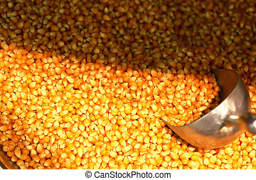 Maize Seeds in a market
