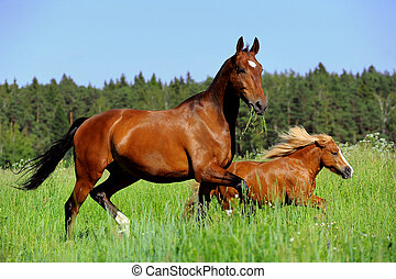 horse and pony on a freedom