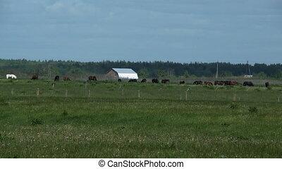 Herd of horses on farm - Herd of horses on meadow