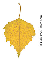 The yellow leaf of a birch