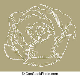Rose sketch - The sketch of a rose bud