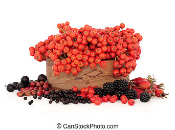 Wild Autumn Berry Fruit