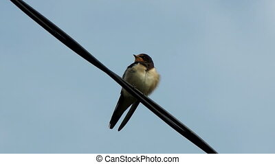 Single swallow bird - close-up view