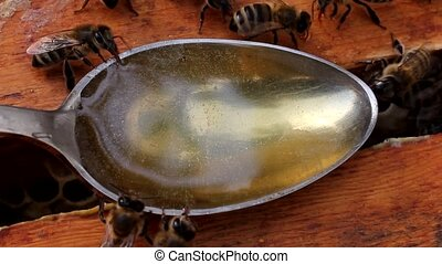 Bees gather nectar from around the spoon
