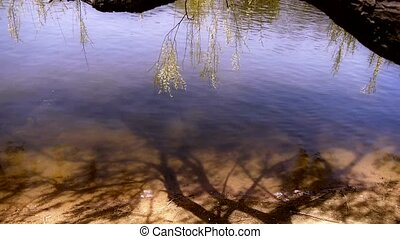 Willows shadow reflection in sparkling water