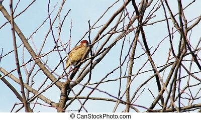 Sparrow sitting on a tree branch in summer