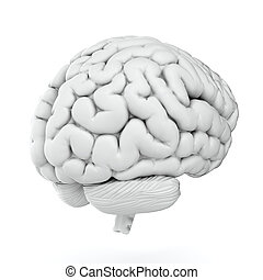 White brain - 3d render of brain on white background
