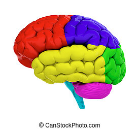 Colored brain - 3d render of brain on white background