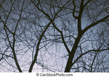 Bare tree branches against the winter dark sky