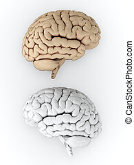 Brain - 3D illustration of white and brown human brain on...