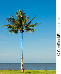 Palm tree by the ocean - A lone coconut tree on a tropical...