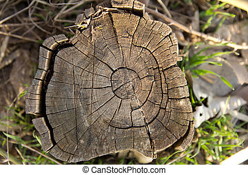 a wooden stump in the background