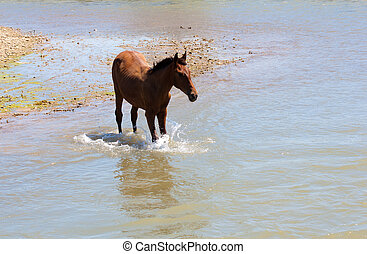 horse in the river on the nature