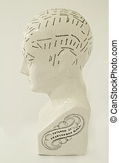 Phrenology Head - A classic phrenology head statue in...