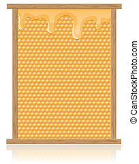 honey comb in the frame vector illustration isolated on...