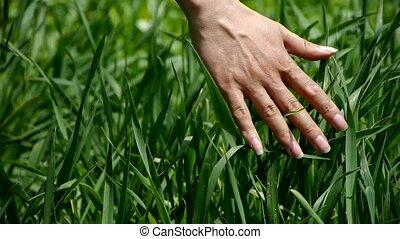 Lush weeds in wind,grassland,Wheat