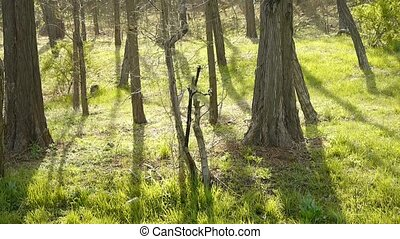 Sun shining on the woods.forest