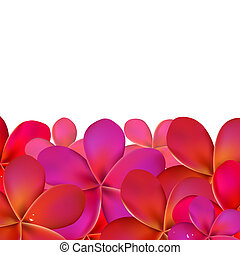Pink Frangipani With Border, Isolated On White Background,...