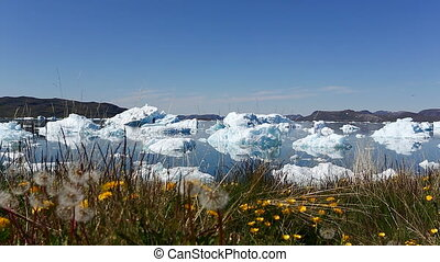 Narsaq icefjord - The icebergs floating around outside of...
