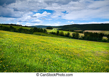 flowering yellow meadows in mountains - meadows with yellow...