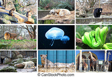 Different animals at the Berlin Zoo Germany
